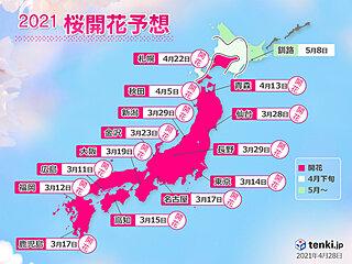 2021年桜開花予想 北の大地でサクラ咲く 根室への終着も平年より早い見込み