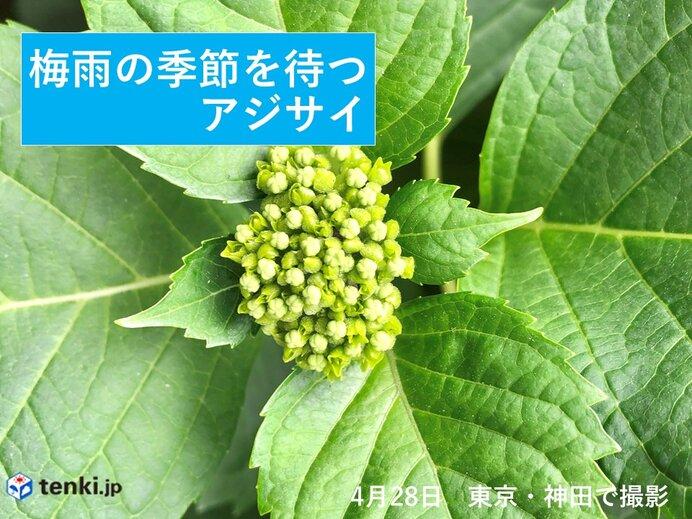 前半 4月30日(金)~5月6日(木) 若葉寒も