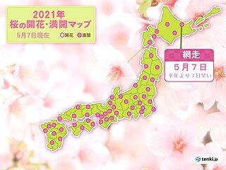 「今年初の夏日」になった網走 開花の翌日に 桜が満開