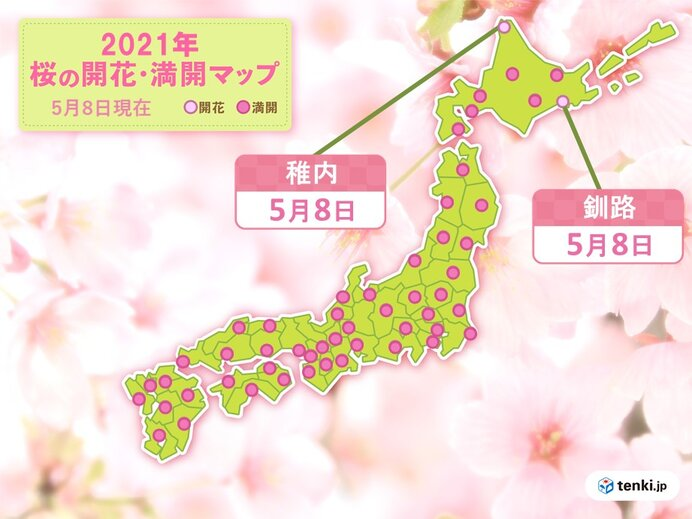 桜前線 北海道の最北に 稚内と釧路で桜開花
