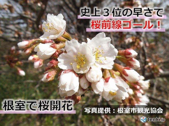 桜前線ゴール! 北海道根室で桜開花