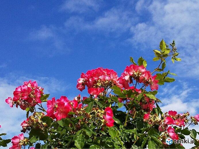 関西 あす金曜日は貴重な晴れ 土曜日以降は梅雨のはしりに