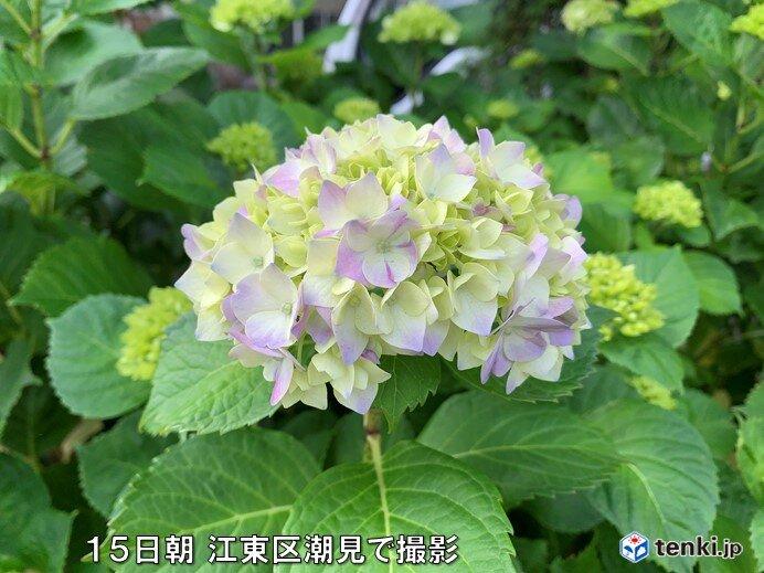 九州北部、中国、四国で梅雨入り 四国は統計開始以来最も早く