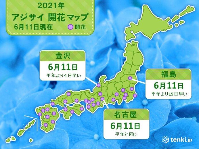 名古屋や金沢、福島でアジサイの開花 福島では統計開始以来2番目の早さ