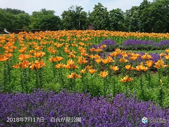 北海道 週末からは夏が本領発揮!
