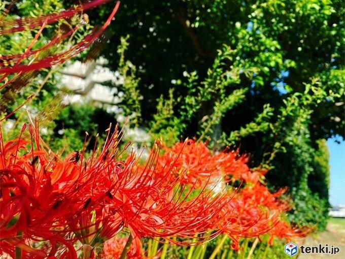 23日秋分の日 関東から九州まで真夏日地点がさらに増える_画像