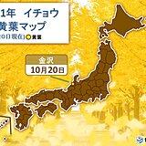 金沢でイチョウが黄葉 今シーズン全国でトップ 過去最も早い記録に