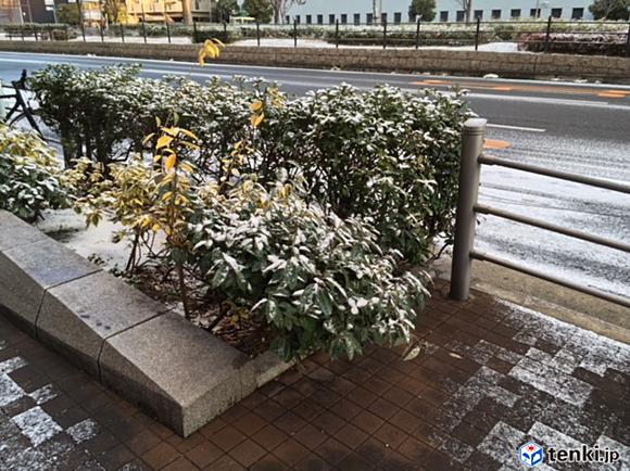 大阪市内 うっすら雪化粧