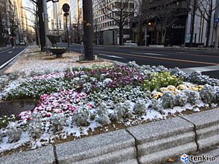 大阪市内でも うっすら雪が積もる