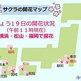 桜 続々開花 横浜や松山、福岡でも