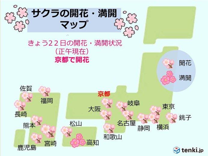 京都で桜開花 平年より早く