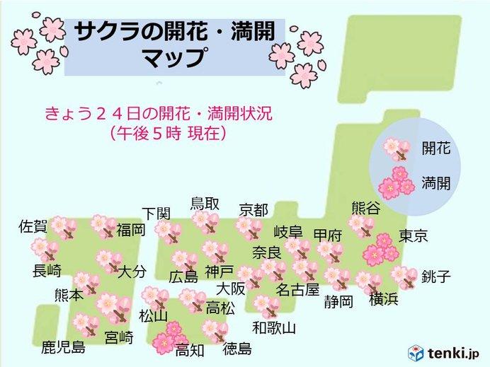 日曜日 見ごろの桜に天晴れ