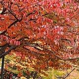 北海道 秋深し 季節の歩みはゆっくりと
