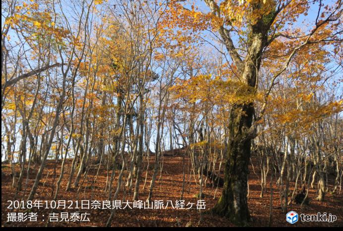 山は紅葉真っ盛り
