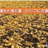 北海道 濡れた落ち葉 スリップに注意