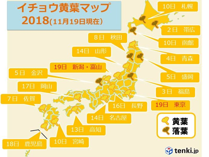 東京 関東地方でいち早くイチョウ黄葉