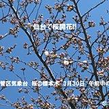 仙台で桜開花 観測史上2番目の早さ