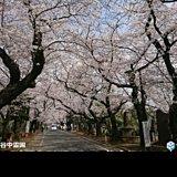3月最終日 雨なし 穏やか