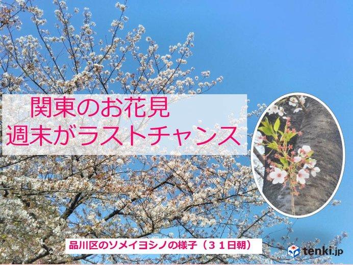 関東のお花見 この週末ラストチャンス