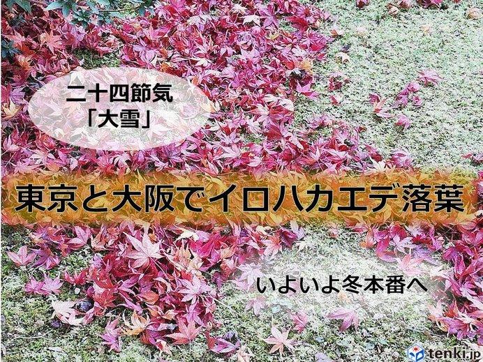 東京と大阪でカエデ落葉 いよいよ冬本番
