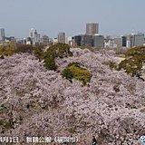 九州 今週は花ふぶき