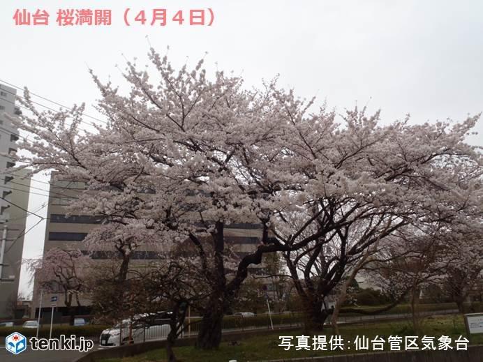 寒の戻り 記録的桜前線どうなる?_画像