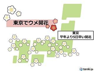いよいよ東京でも梅咲く 平年より早い開花
