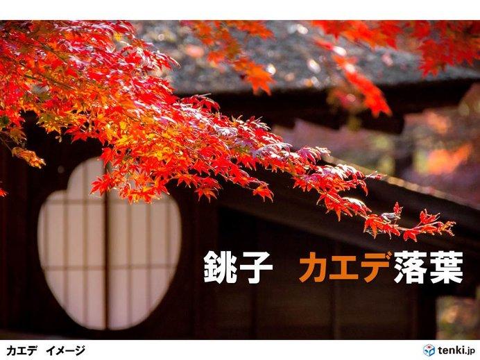 1月に秋の終わり?千葉県銚子でカエデ落葉