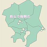 熊谷で梅開花 平年より15日早い