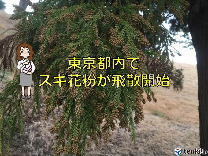 東京都内でスギ花粉が飛散開始