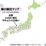 春うらら 京都で梅開花