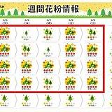 5日(火)、花粉の大量飛散に要注意