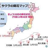 長崎で桜(ソメイヨシノ)開花 全国トップ