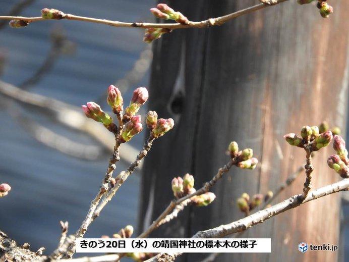 桜の開花を促す雨に