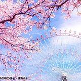 関東週間 東京に続く桜開花は? 週末は花冷え