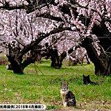 日本一のあんずの里 開花まであとわずか