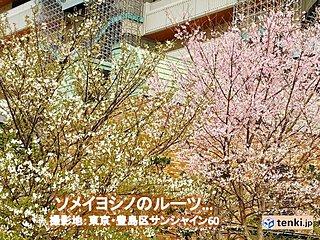 関東 天気回復 舞い散る花に風情あり