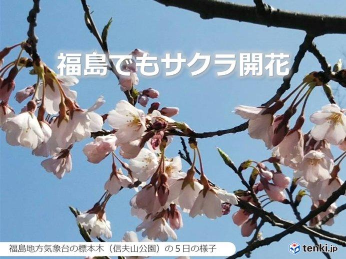 仙台と福島でソメイヨシノ開花 東北では初