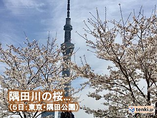 関東6日 満開に向かう桜 散りゆく桜