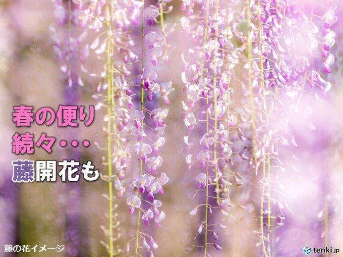 きょうも春の便り続々 桜前線は北へ 関東は佳境