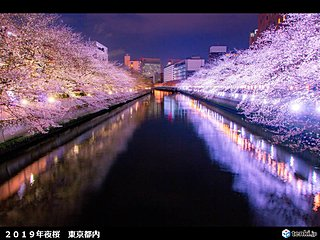 関東の天気 7日は雲が増える 花びら舞う夜桜も