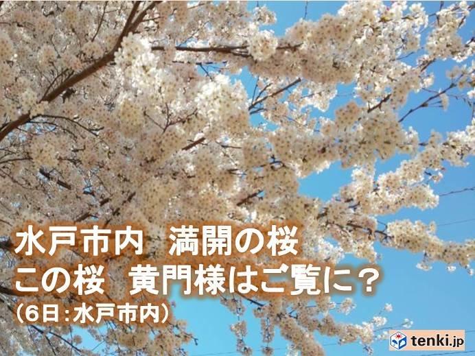 関東南部 平成最後のお花見は花曇り