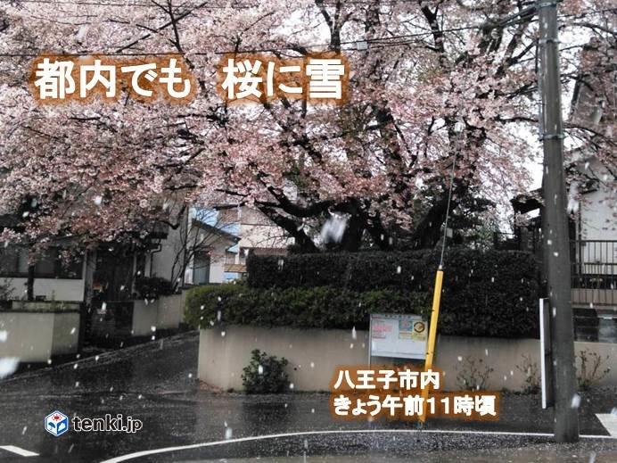 4月なのに寒い 都内でも桜に雪