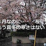 雪降るほど寒かった関東 もう真冬の寒さはない?