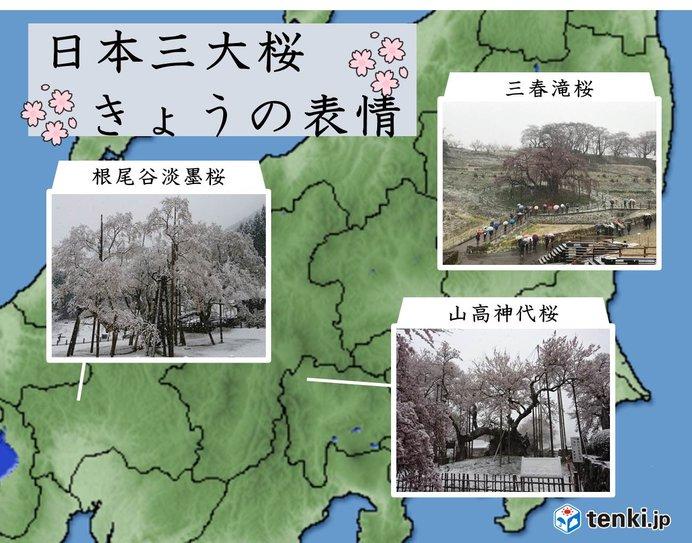 日本三大桜も雪と共演 平成最後の雪化粧