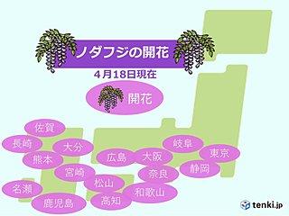 東京でノダフジ開花 奈良でも 春の便り続々