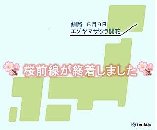 桜前線ついに釧路でゴール
