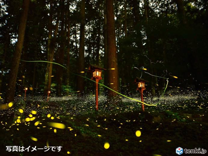 九州 ホタルの季節 福岡と鹿児島でも光瞬く