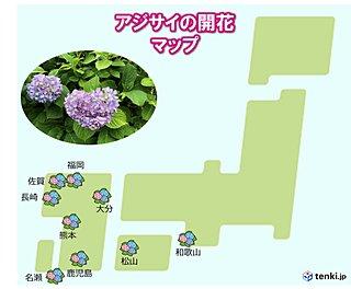 アジサイの季節に 西日本で「真の花」開花