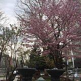 北海道 連休前半はお花見日和